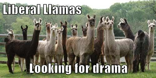 Liberal Llamas  Looking for drama