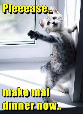Pleeease..  make mai        dinner now..
