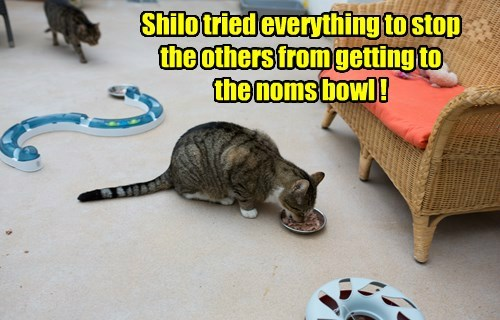 Shilo tried everything to stop the others from getting to the noms bowl !