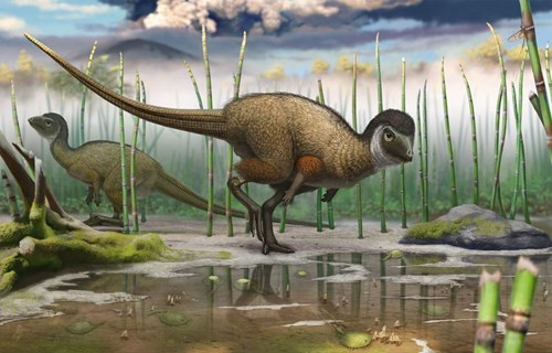 Did Most Dinosaurs Have Feathers?