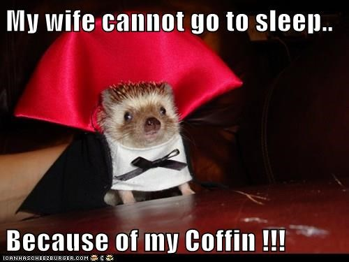 My wife cannot go to sleep..  Because of my Coffin !!!