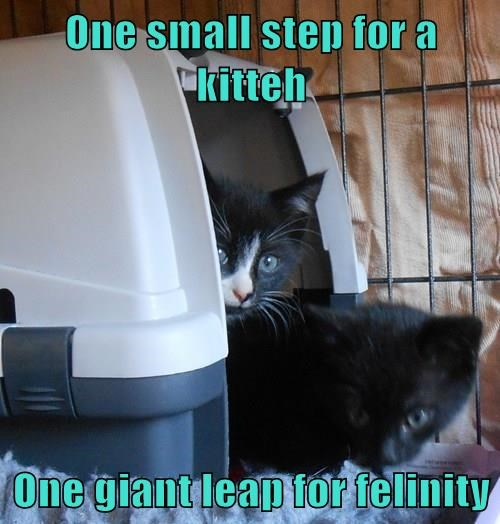 One small step for a kitteh  One giant leap for felinity