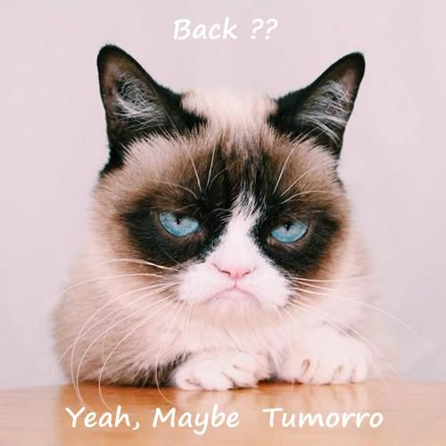 Back ??  Yeah, Maybe  Tumorro