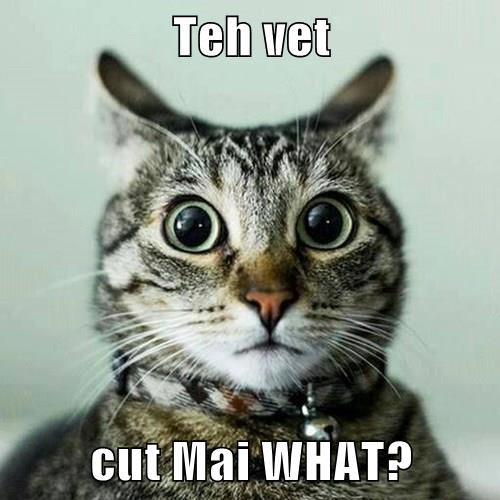 Teh vet  cut Mai WHAT?