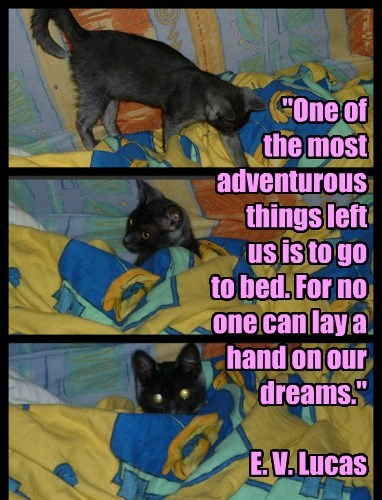 """One of  the most adventurous things left  us is to go  to bed. For no one can lay a hand on our dreams.""  E. V. Lucas"