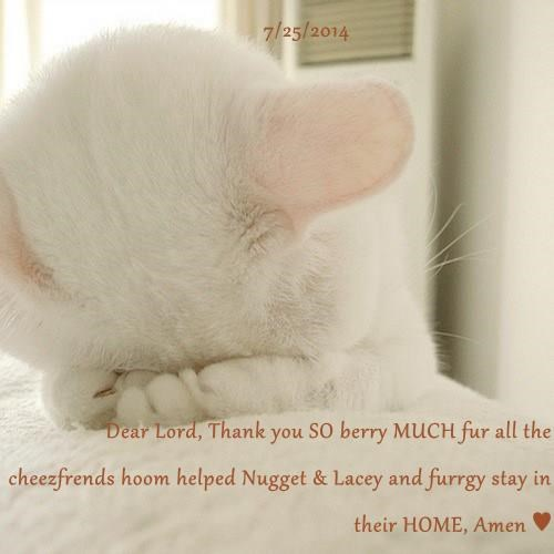 7/25/2014  Dear Lord, Thank you SO berry MUCH fur all the cheezfrends hoom helped Nugget & Lacey and furrgy stay in their HOME, Amen ♥