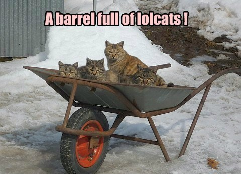 A barrel full of lolcats !