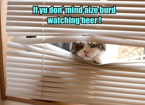 If yu don' mind aize burd watching heer !