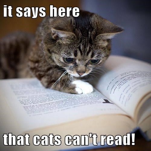 it says here  that cats can't read!