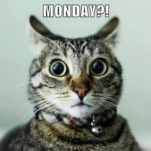 MONDAY?!