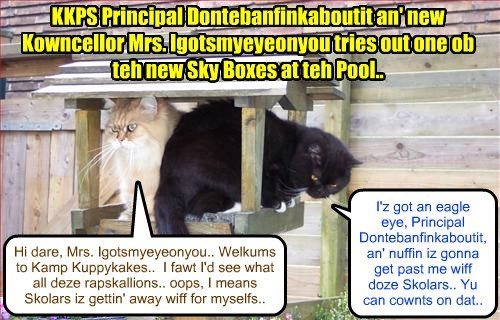 KKPS Maintenance Kittie Mr. AllThumbs put up a bunch of fancy Sky Boxes around teh Pool area, so dat kitties could relax in comforts an' watch all teh aktibities takin' place..
