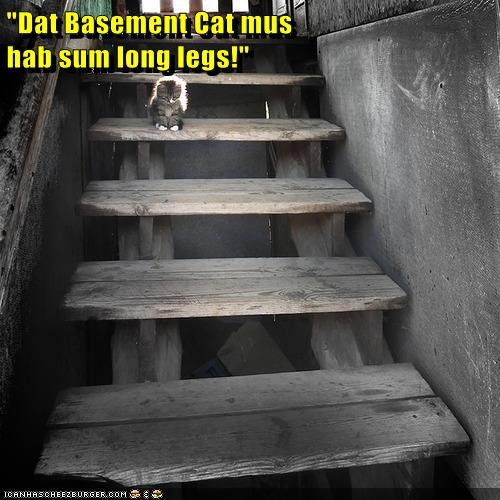 """Dat Basement Cat mus                                                                   hab sum long legs!"""