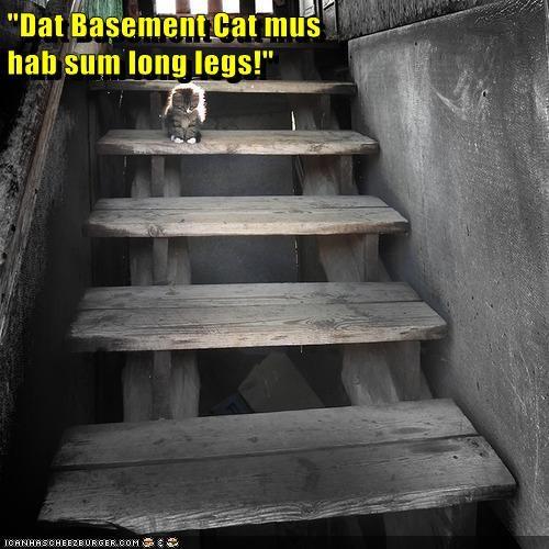 Are You Sure Basement Cat Isn't a Basement Lion?