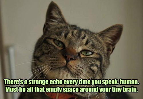 There's a strange echo every time you speak, human. Must be all that empty space around your tiny brain.