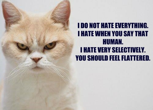 I DO NOT HATE EVERYTHING. I HATE WHEN YOU SAY THAT HUMAN. I HATE VERY SELECTIVELY. YOU SHOULD FEEL FLATTERED.