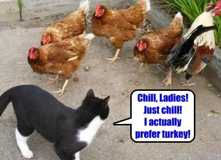 chickens,relax,turkeys,Cats