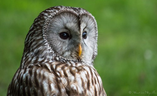 face,owls,science,biology,funny