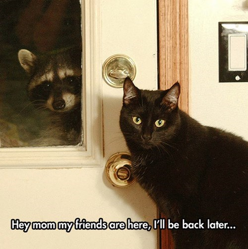 friends,raccoons,Cats