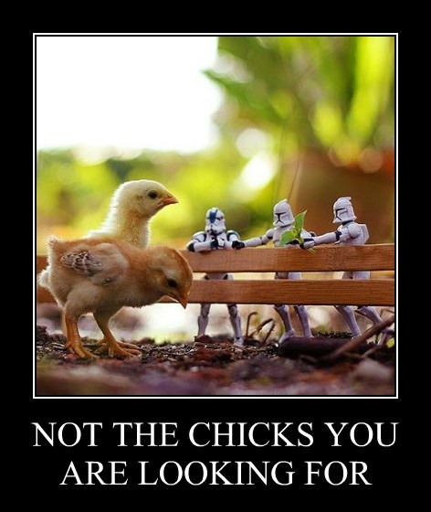 NOT THE CHICKS YOU ARE LOOKING FOR
