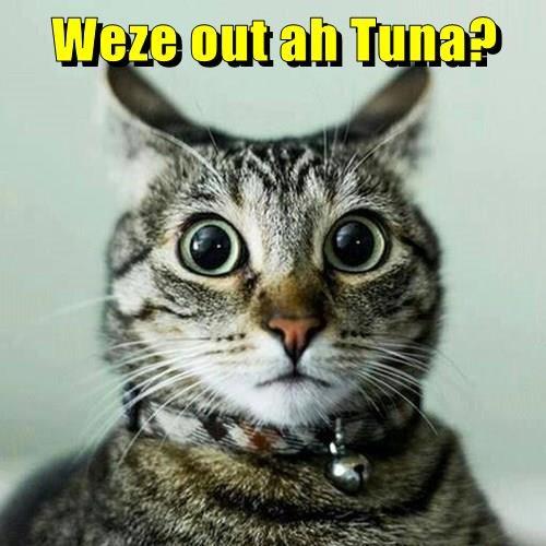 Weze out ah Tuna?