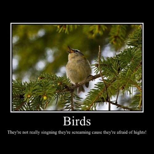 birds,heights,phobia,funny