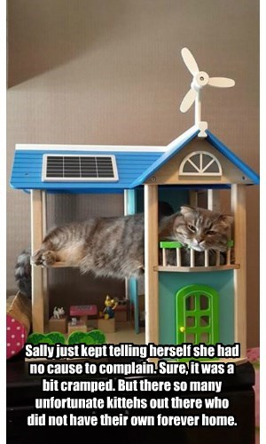 Sally just kept telling herself she had no cause to complain. Sure, it was a bit cramped. But there so many unfortunate kittehs out there who did not have their own forever home.