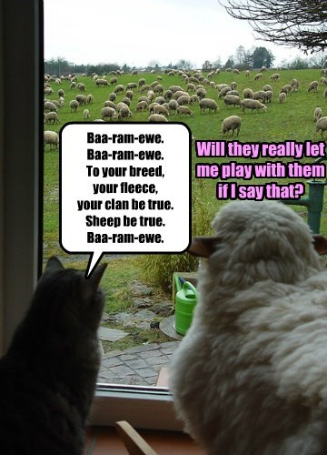 Baa-ram-ewe.  Baa-ram-ewe.  To your breed,  your fleece,  your clan be true. Sheep be true.  Baa-ram-ewe.