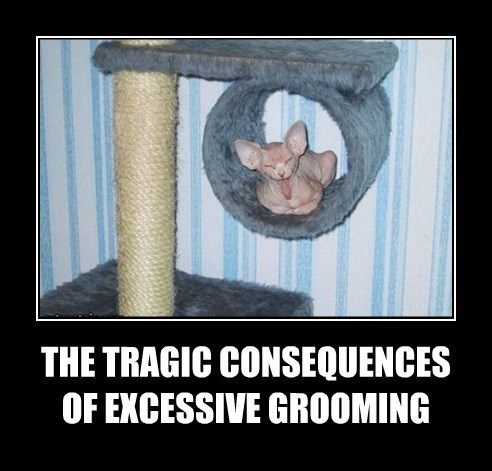 THE TRAGIC CONSEQUENCES  OF EXCESSIVE GROOMING