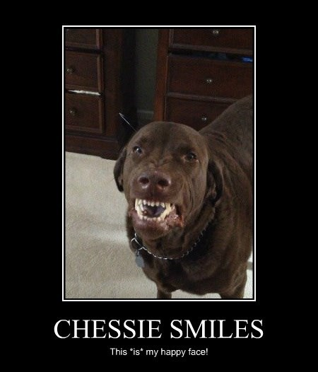 CHESSIE SMILES