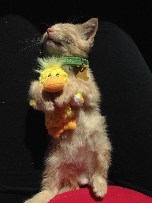 kitten,stuffed animal,mine,cute,Cats