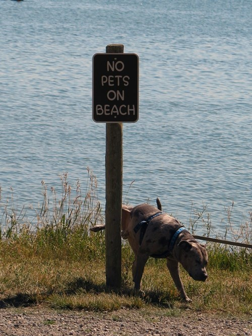 dogs,signs,no dogs allowed
