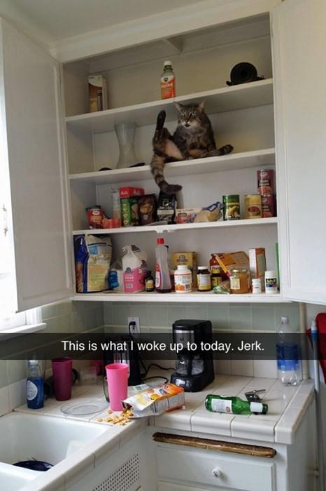 jerk,mess,Cats,funny