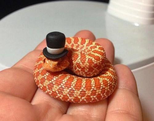 poorly dressed,top hat,sir,snake