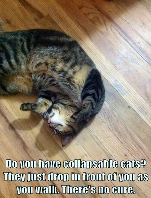 Do you have collapsable cats? They just drop in front of you as you walk. There's no cure.
