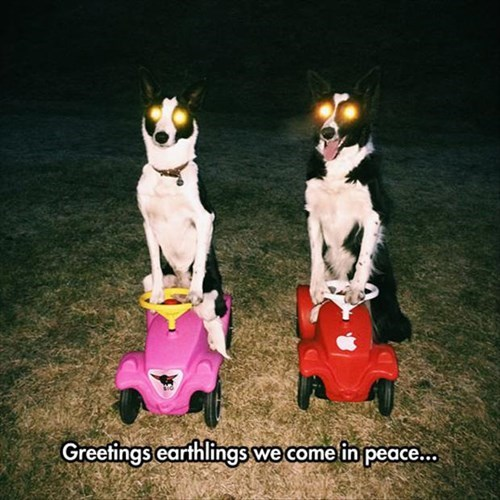 Aliens,dogs,puns,funny
