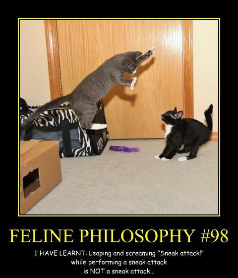 FELINE PHILOSOPHY #98