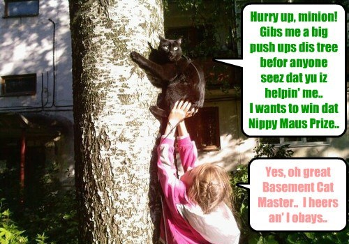 Basement Cat receives unfair advantage from hoomin minion in tree climbing game at teh Kamp Karnival..