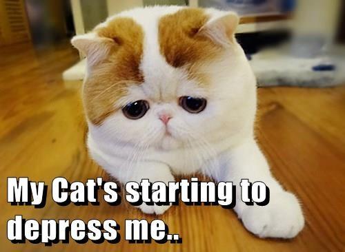 My Cat's starting to depress me..