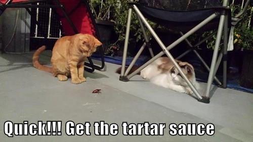 Quick!!! Get the tartar sauce