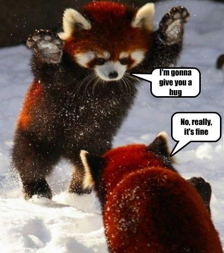 Red Panda Hug Brigade