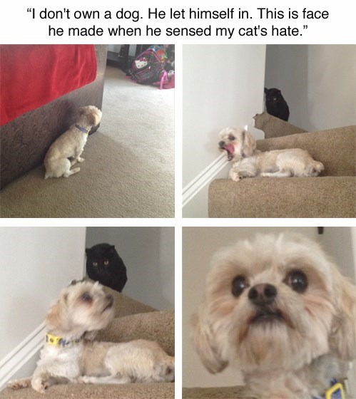 dogs,angry,Cats,funny,dont-mind-if-i-do