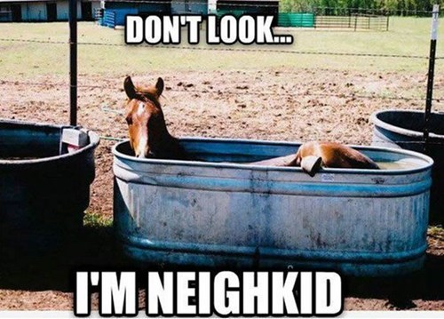 puns,bathroom,horse