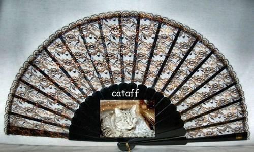 Thanks to cataff, my biggest fan...