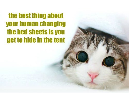 the best thing about your human changing the bed sheets is you get to hide in the tent