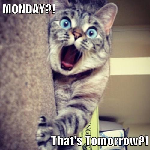 MONDAY?!  That's Tomorrow?!