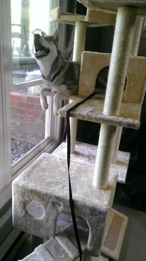 I iz best kitteh!