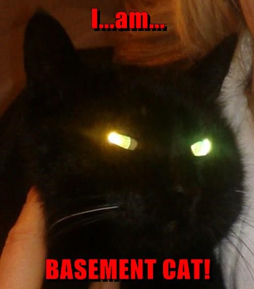 I...am...  BASEMENT CAT!