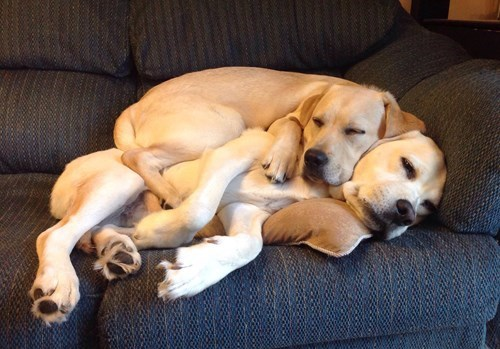 dogs,cute,napping,sleeping