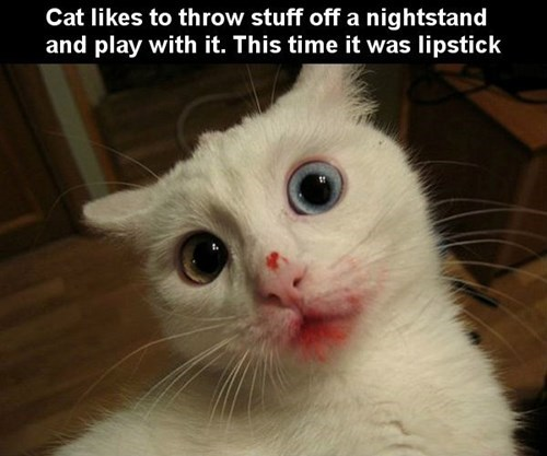 creepy,lipstick,Cats
