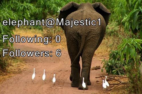 elephant@Majestic1 Following: 0                Followers: 6